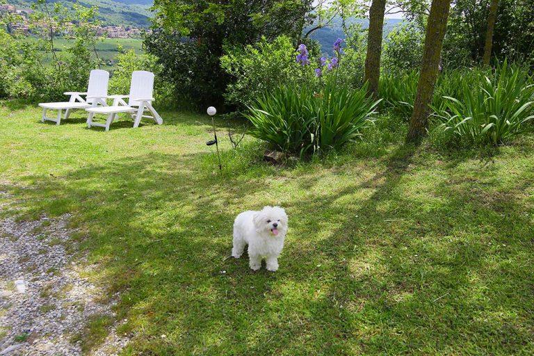 mini vacanza in toscana giardino podere poderaccio 2 con tito